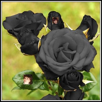 Germany ru черная роза профиль профиль