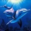 Самка Дельфина
